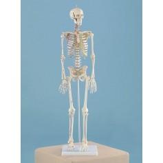 Squelette miniature Daniel Erler Zimmer