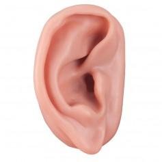 acupuncture de l'oreille,droite