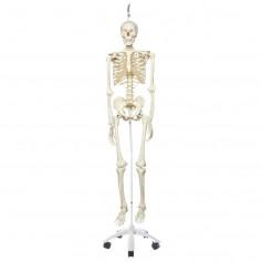 Squelette stan sur pied d'accrochage métallique avec 5 roulettes