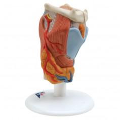 Larynx, en 2 parties