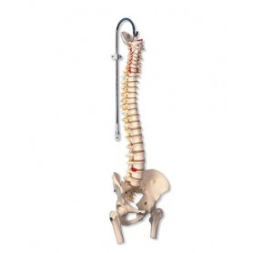 Colonne vertébrale flexible pour la forte sollicitation