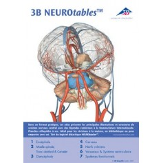 3B NEURO tables français
